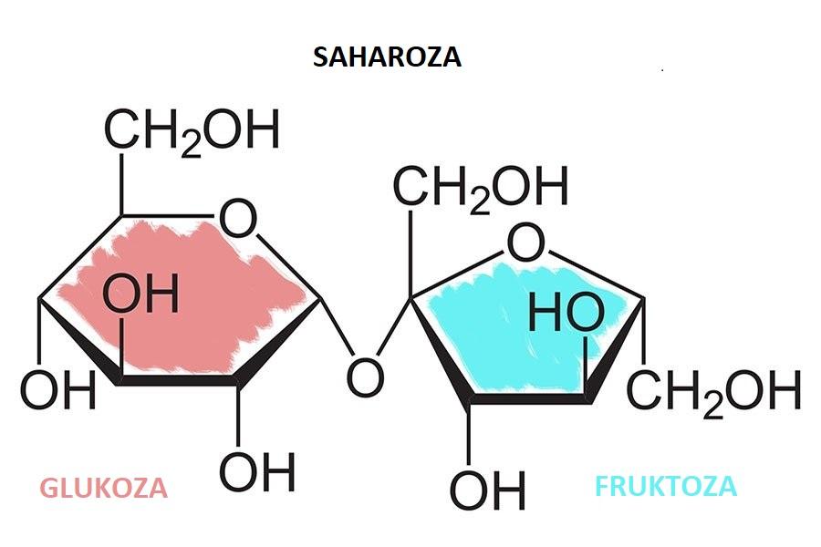 Fruktoza skupaj z glukozo tvori saharozo.